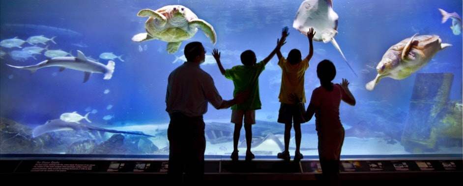 Adventure Aquarium Annual Family Pass 125 On Groupon