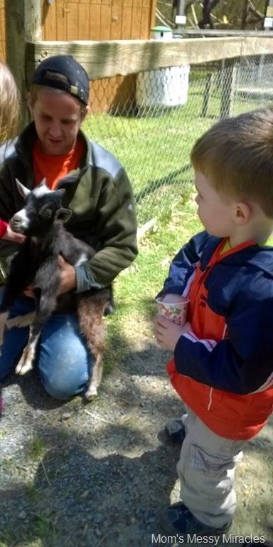 petting baby goat