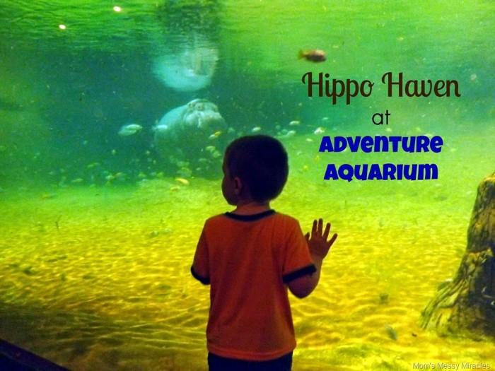 Hippo Haven at Adventure Aquarium