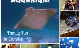 Adventure-252520Aquarium_thumb-25255B9-25255D