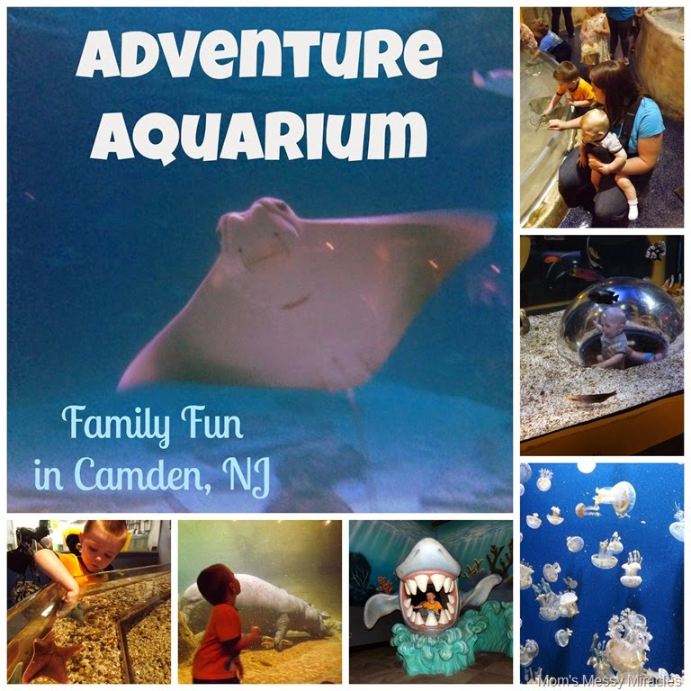 Fun For the Whole Family at Adventure Aquarium - The Shirley