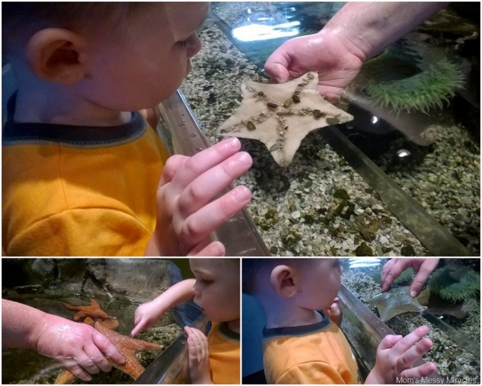 Charlie touching starfish at Adventure Aquarium