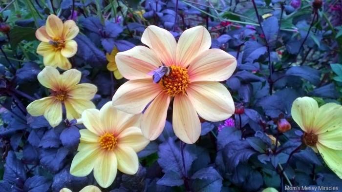 bee with flowers Longwood Gardens