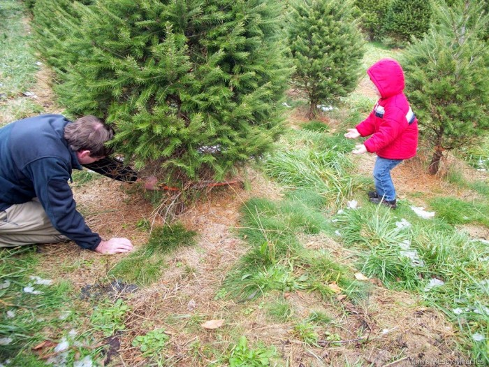 Charlie tried catching the tree as Daddy was cutting it.
