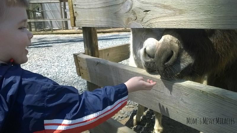 Feeding Donkeys at the zoo